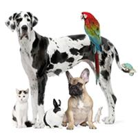 Save on Pet Prescriptons at your Local Pharmacy - Good for household pets and farm and live stock animals